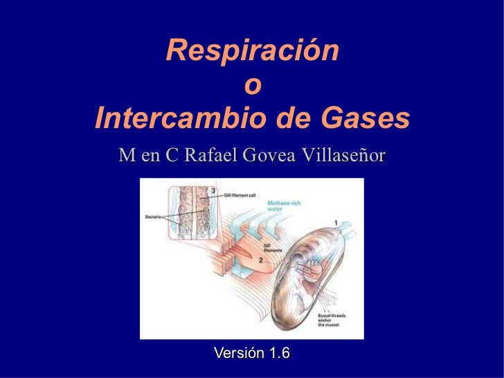 Intercambio de Gases