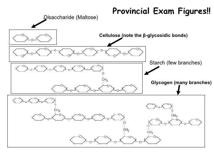 Di saccharide (Maltose) Cellulose   (note the  β -glycosidic bonds) Provincial Exam Figures!! Starch (few branches) Glycog...