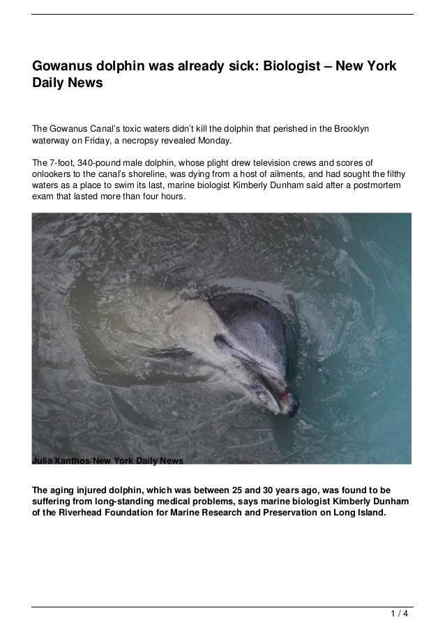 Gowanus dolphin was already sick: Biologist – New YorkDaily NewsThe Gowanus Canal's toxic waters didn't kill the dolphin t...