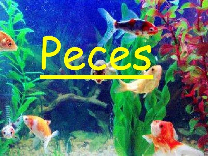 Peces<br />