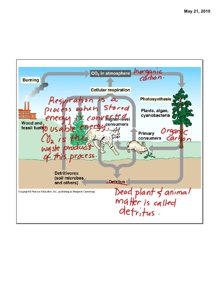 Gr10 may13, 18 carbon cycle
