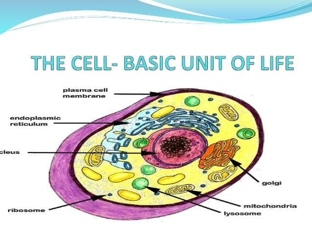 Grade 10 The Cell