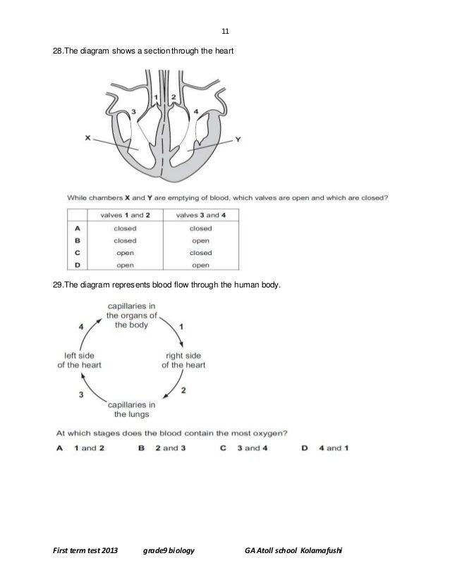 Bio term papers