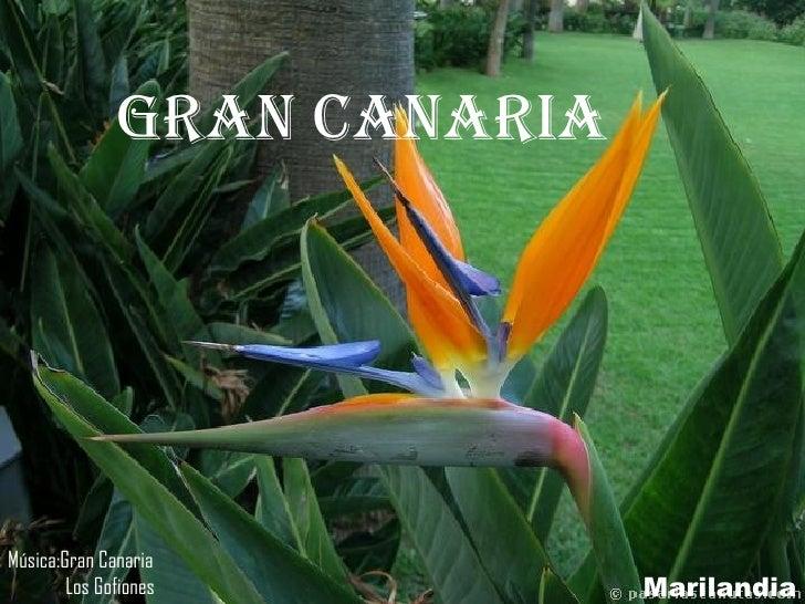 gran canaria Marilandia Música:Gran Canaria Los Gofiones