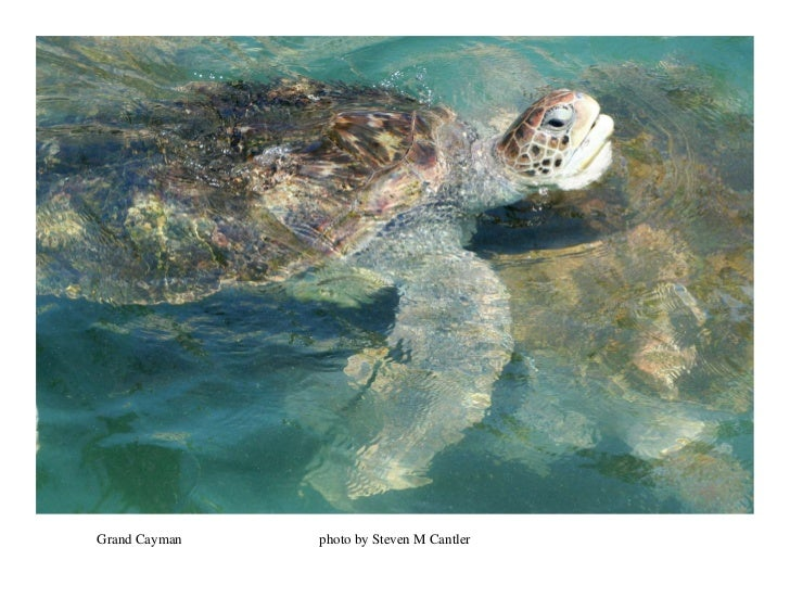 Grand Cayman   photo by Steven M Cantler