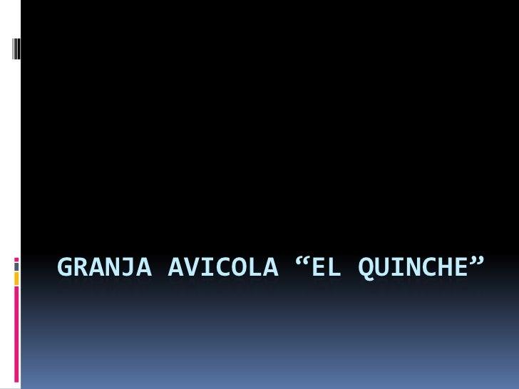 """GRANJA AVICOLA """"EL QUINCHE""""<br />"""