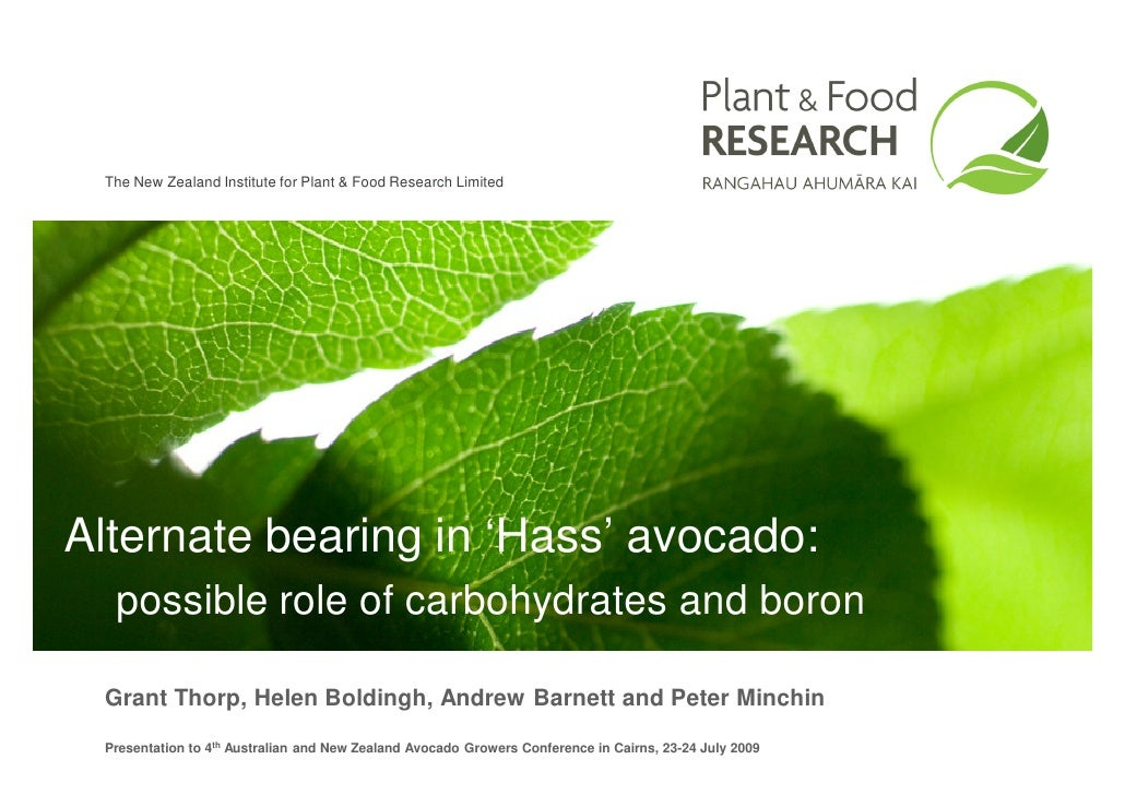 The New Zealand Institute for Plant & Food Research Limited     Alternate bearing in 'Hass' avocado:   possible role of ca...