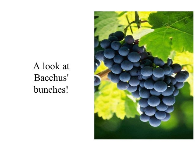 A look at Bacchus' bunches!