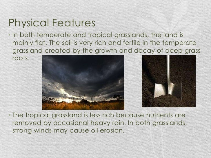 tropical grassland physical features Montane or alpine grasslands may be tropical, subtropical or temperate and occur in cool temperatures at high elevations, such as the steppes of the tibetan plateaus the highest-elevation montane grasslands are called the alpine tundra.