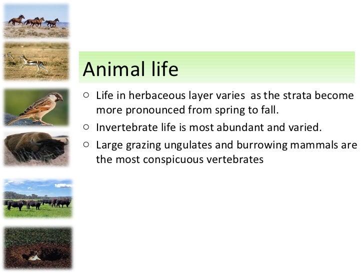 Human Impact  Most grasslands Ungulate Grasslands