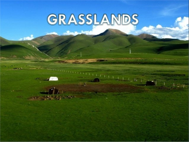 GrasslandsForests    Desserts