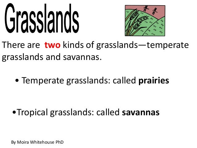 There are two kinds of grasslands—temperategrasslands and savannas.• Temperate grasslands: called prairies•Tropical grassl...
