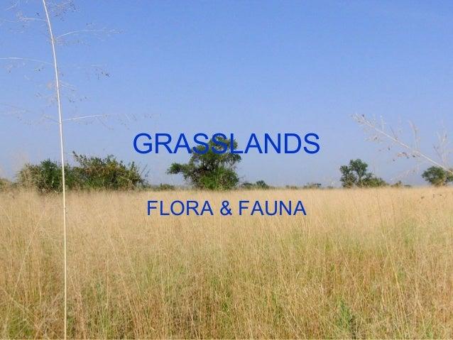 GRASSLANDS FLORA & FAUNA