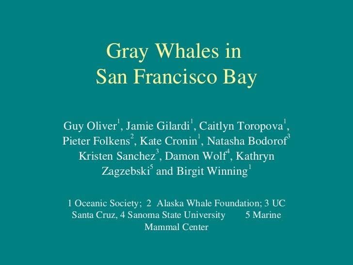 Gray Whales in       San Francisco BayGuy Oliver1, Jamie Gilardi1, Caitlyn Toropova1,Pieter Folkens2, Kate Cronin1, Natash...