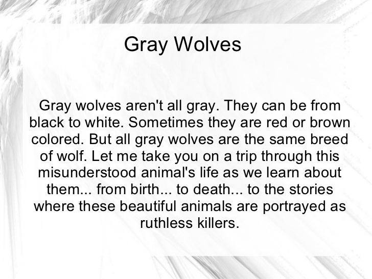 Gray Wolves Gray wolves aren't all gray. They can be from black to white. Sometimes they are red or brown colored. But all...