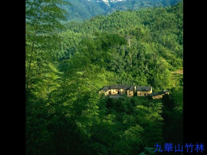 九華山竹林