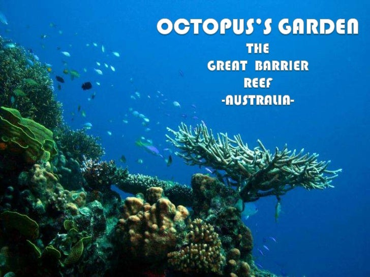 Octopus's Garden - Great barrier reef