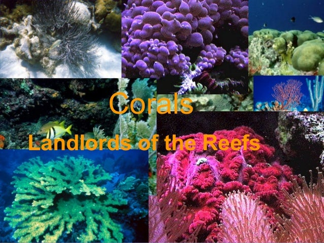 CoralsLandlords of the Reefs