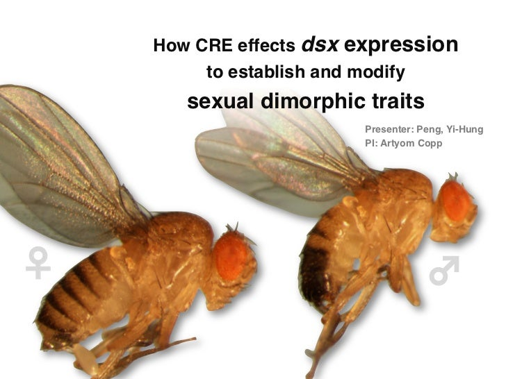 """How CRE effects dsx expression                      to establish and modify           sexual dimorphic traits""""          ..."""
