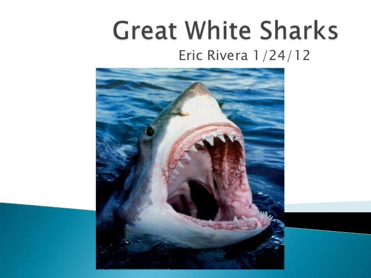 Great white sharks project