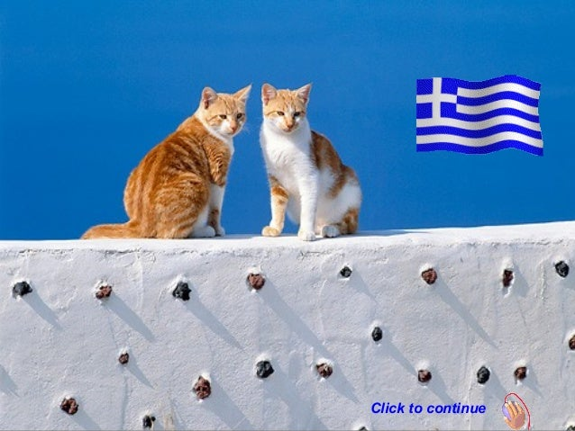 Greek Cats. (Nikos)