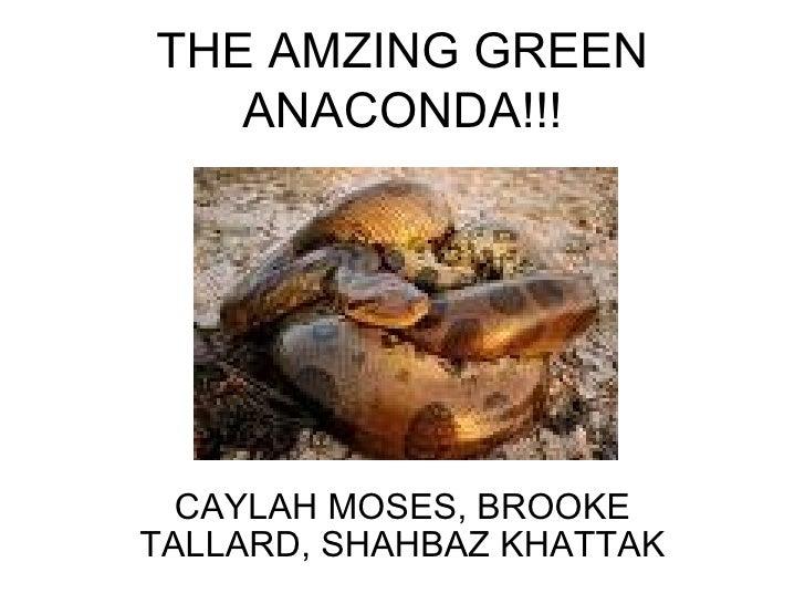 THE AMZING GREEN ANACONDA!!! CAYLAH MOSES, BROOKE TALLARD, SHAHBAZ KHATTAK