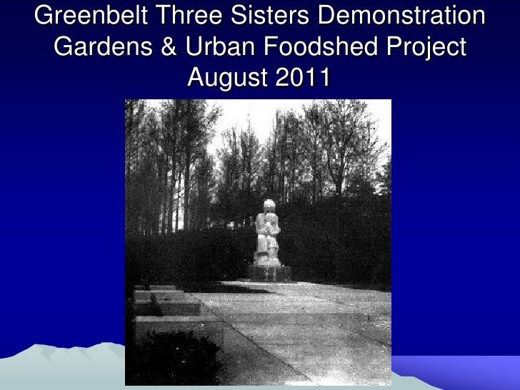 Greenbelt Three Sisters Garden Update August 2011