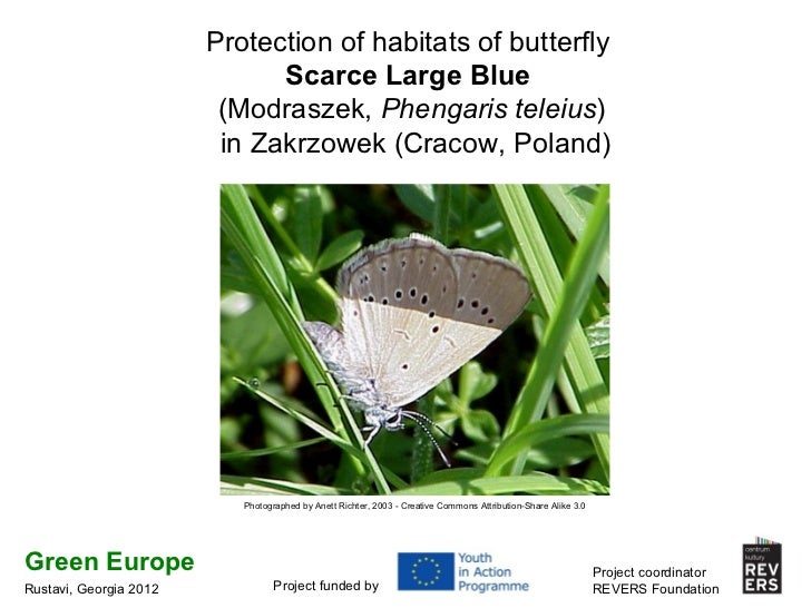Protection of habitats of butterfly Scarce Large Blue