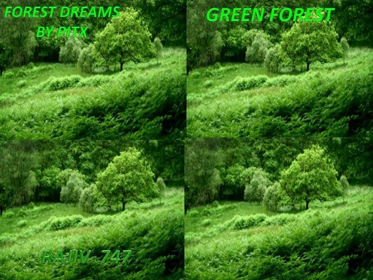 GREEN   FOREST<br />Green forest<br />Forest dreams<br />By pitx<br />RAJIV  747<br />