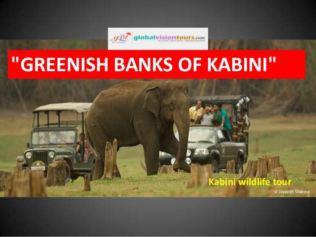 Greenish banks of kabini