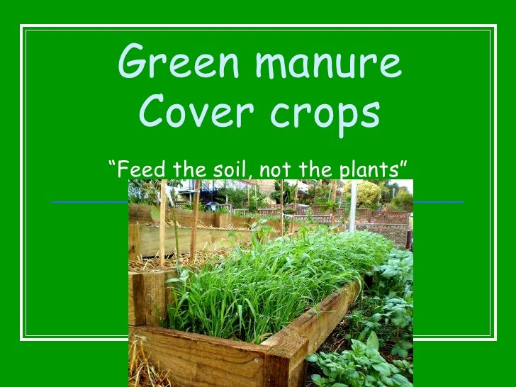 "Green manure Cover crops "" Feed the soil, not the plants"""