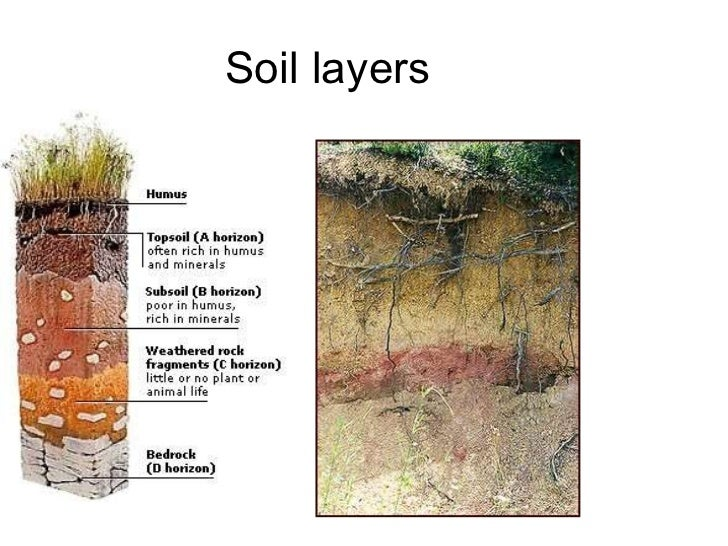Gretchen soils slideshow