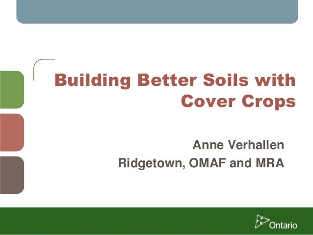 Building Better Soils with Cover Crops Anne Verhallen Ridgetown, OMAF and MRA