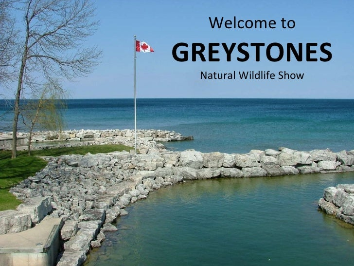 Welcome to  GREYSTONES Natural Wildlife Show