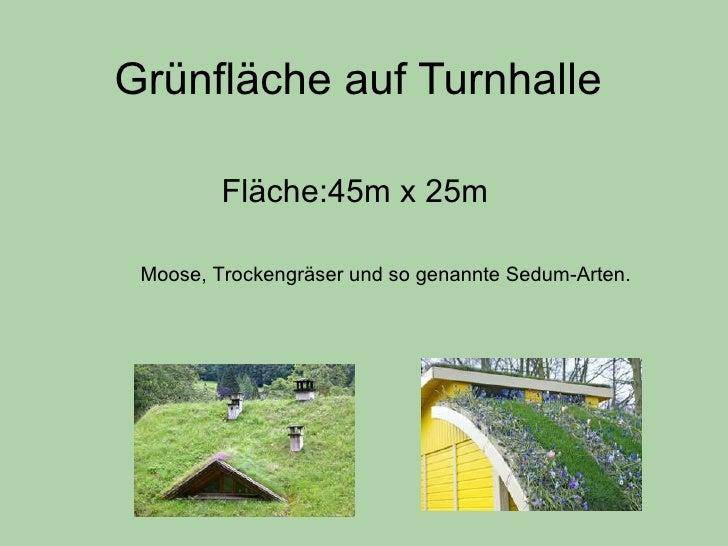 Grünfläche auf Turnhalle Fläche:45m x 25m Moose, Trockengräser und so genannte Sedum-Arten.