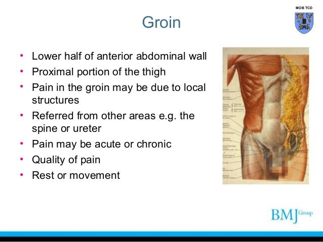 Groin anatomy diagram