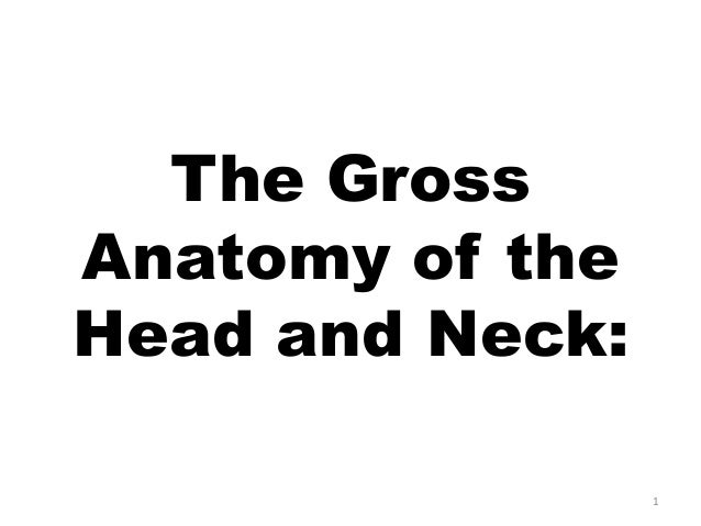 The Gross Anatomy of the Head and Neck: 1