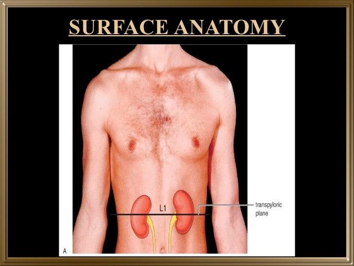 Atlas of clinical gross anatomy