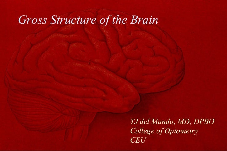 Gross Structure of the Brain TJ del Mundo, MD, DPBO College of Optometry CEU