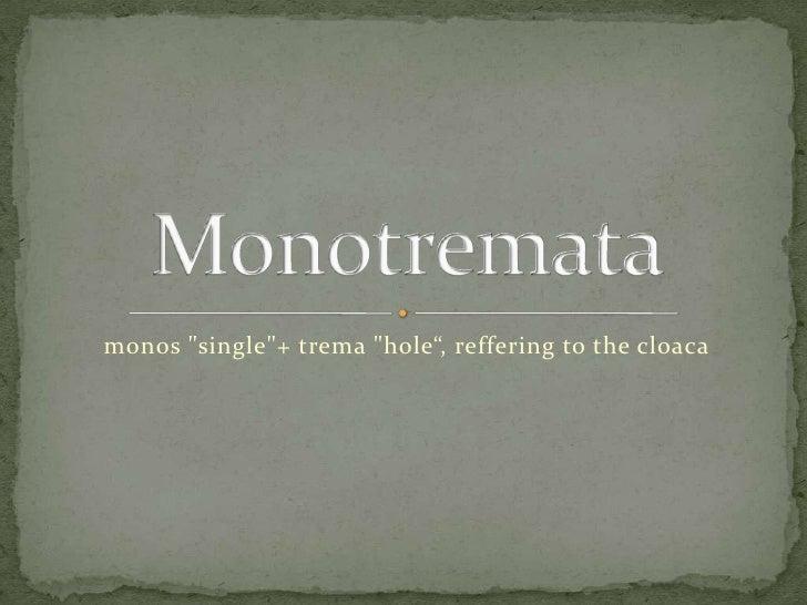 "monos ""single""+ trema ""hole"", reffering to the cloaca"