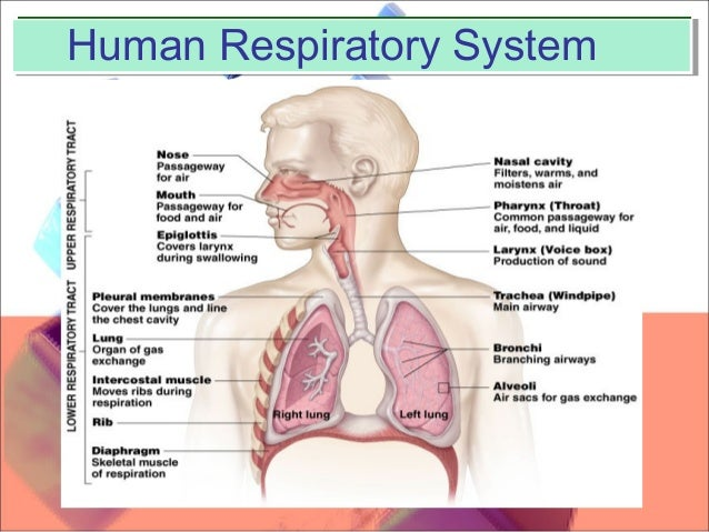 Mouth To Mouth Respiration 79