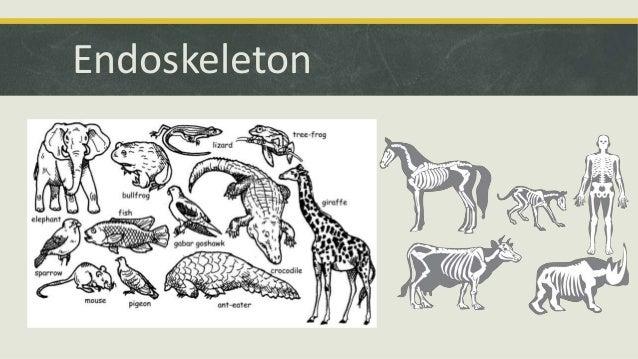 Define comparative anatomy