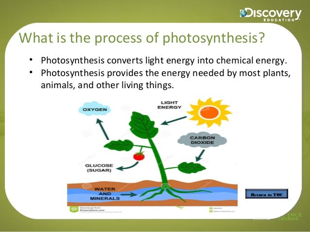 the process of photosynthesis Photosynthesis is a process in which green plants use energy from the sun to transform water, carbon dioxide, and minerals into oxygen and organic compounds.