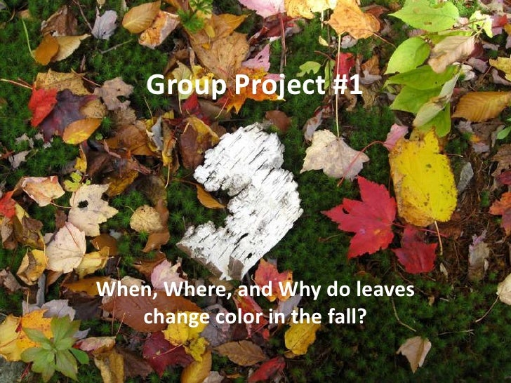 Group Project #1<br />When, Where, and Why do leaves change color in the fall?<br />