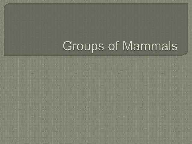 Groups of mammals