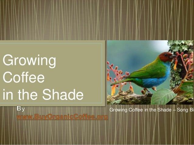 Growing Coffee in the Shade Growing Coffee in the Shade – Song Bir