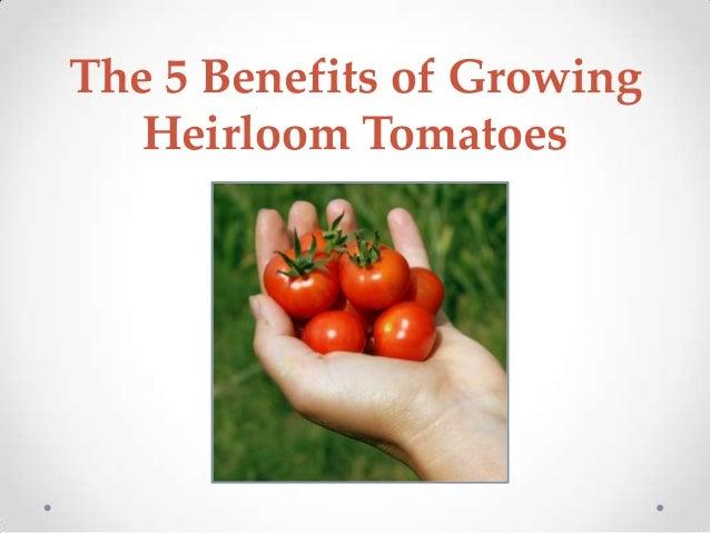 The 5 Benefits of Growing Heirloom Tomatoes