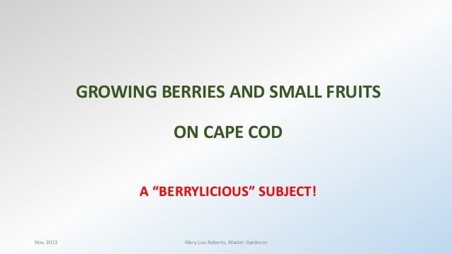 "GROWING BERRIES AND SMALL FRUITS ON CAPE COD A ""BERRYLICIOUS"" SUBJECT!  Nov. 2013  Mary Lou Roberts, Master Gardener"