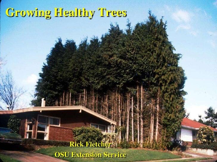 Growing Healthy Trees<br />Rick Fletcher<br />OSU Extension Service<br />