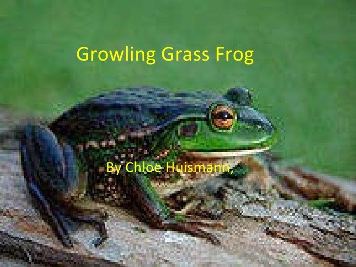 Growling Grass Frog By Chloe Huismann,